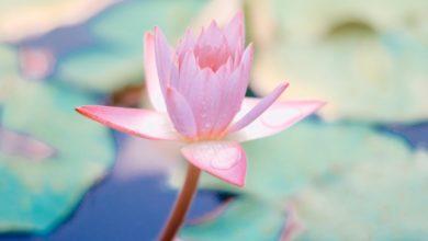 Photo of Вдохните в себя жизнь: 3 способа очистки корневой чакры