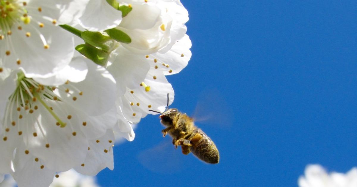 Роль пчелы в жизни на земле