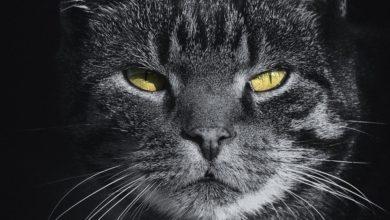 Photo of Кошачья символика: роль кошки в духовном мире