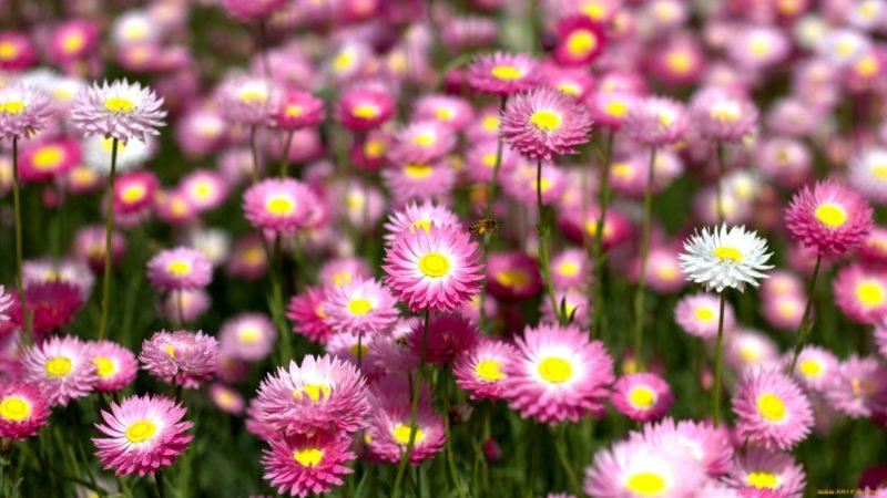 Тайна женского имени: цветок имени