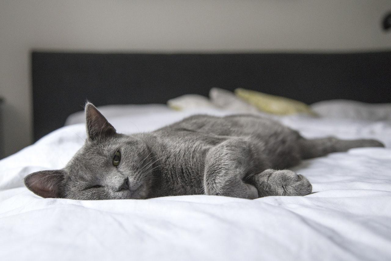 Кошачья символика: роль кошки в духовном мире