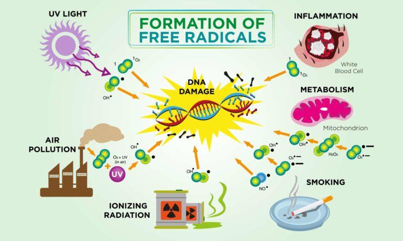 Теория свободных радикалов: откуда берутся болезни икакрадиация вредит здоровью