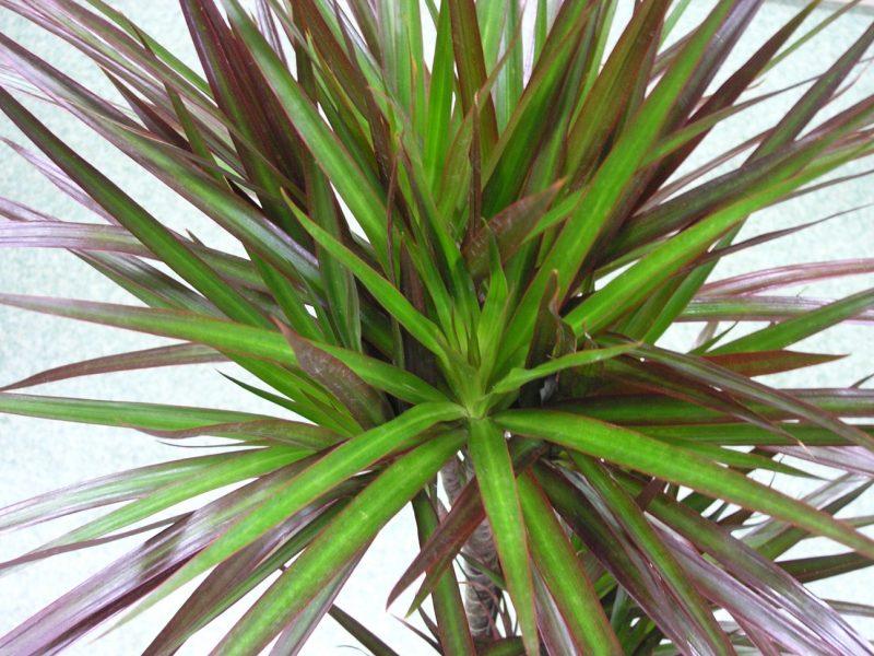Энергетика комнатных растений: выбираем собственного «помощника»