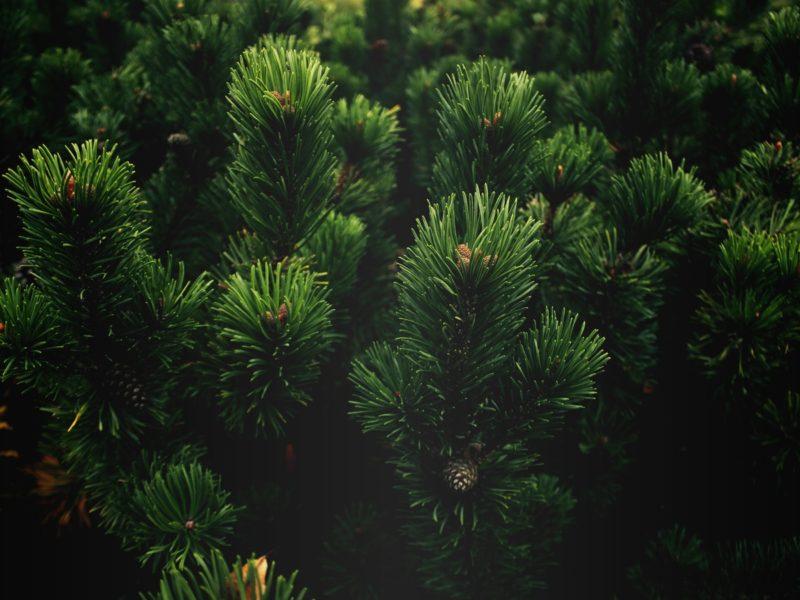 Лесотерапия — примите лесную ванну и омолодитесь