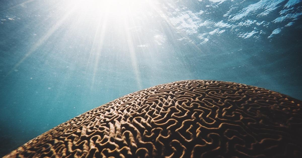 Почему наш мозг ищет проблемы даже там, где их нет