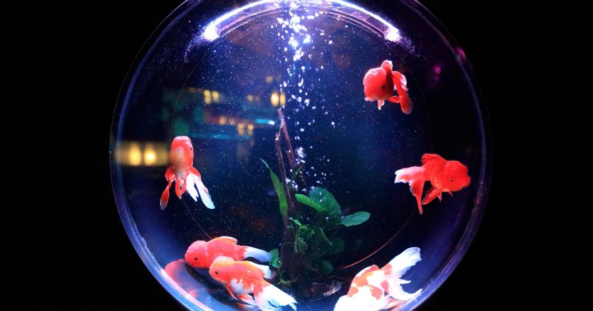 5 причин, почему Рыбы — самые сложные люди