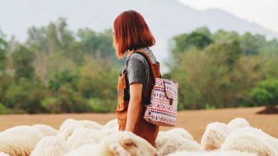 Волки и овцы, или Как нарциссы, социопаты и психопаты пытаются превратить вас в послушное стадо