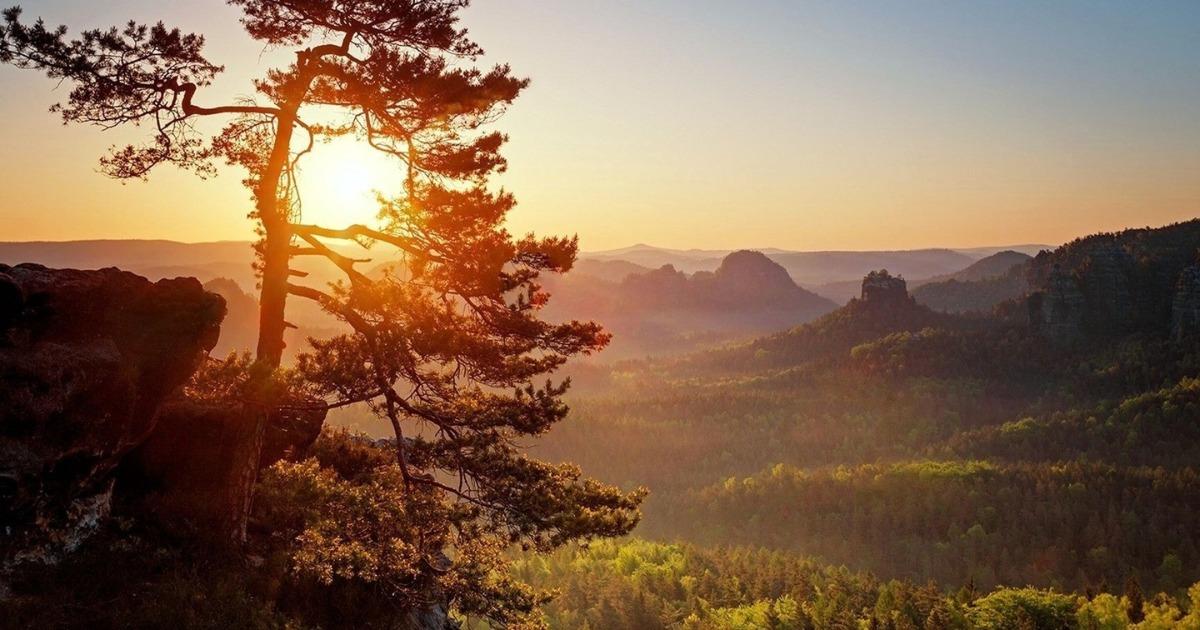 5 деревьев с самой сильной энергетикой