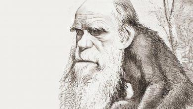 Photo of Мифы об эволюции человека