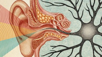Наука говорит, что тишина жизненно важна для нашего мозга