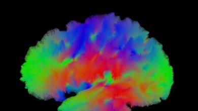 Ученые нашли источник мышления — это «внутренняя GPS» человеческого мозга