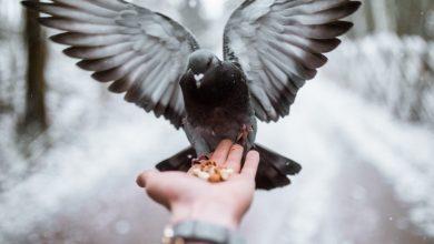 В декабре Небеса открыты и вы можете поговорить со своим ангелом-хранителем