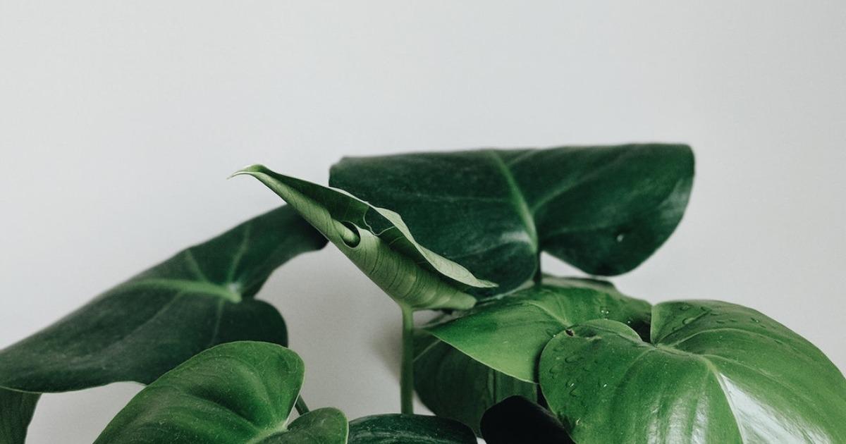 Комнатные растения — лучшие очистители воздуха в доме!