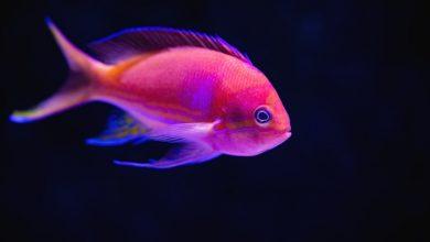 Photo of Рыбы — люди сложные, но такие любимые