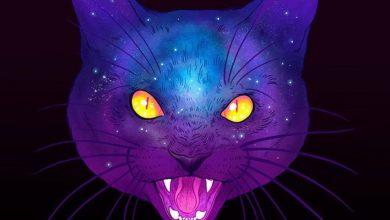 Photo of Могут ли кошки видеть «духов»?