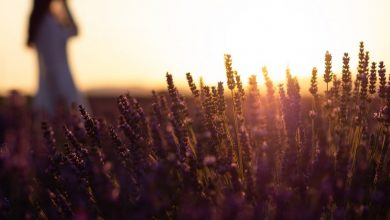 7 эфирных масел, которые необходимы при болезни Альцгеймера