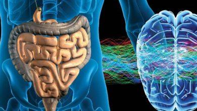 Photo of Энтеральная нервная система — ваш «второй мозг»