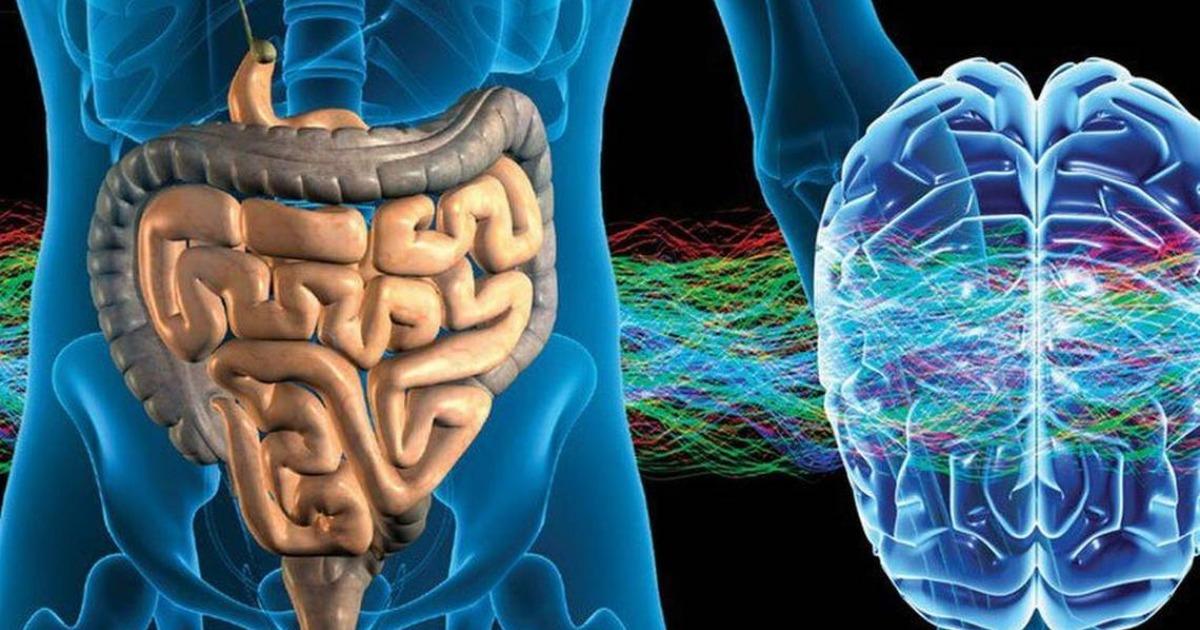 Энтеральная нервная система — ваш «второй мозг»