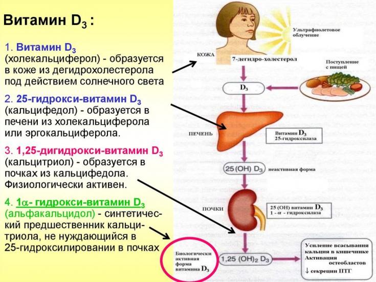Польза витамина D для женщин и признаки его дефицита