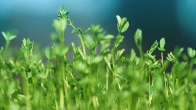10 интересных фактов о зелени, о которых вы могли не знать