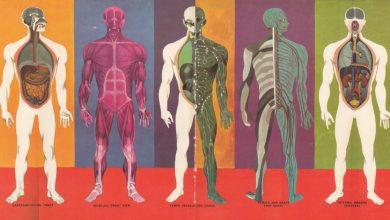 Болезни суставов — это заболевания лимфатической системы