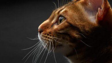 10 жизненных уроков, которым может научить ваша кошка