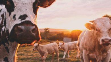 Польза или вред: какие молочные продукты необходимо исключить из рациона