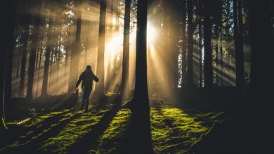 Photo of О духовном избегании, отношениях и дхарме