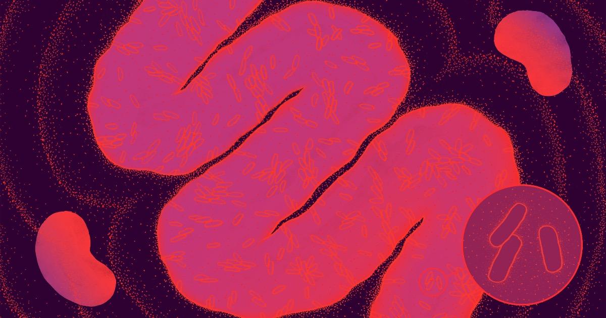 Богатый внутренний мир: как кишечные микробы определяют наше здоровье и сознание