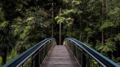 Photo of Почему природа лечит и сколько времени нужно уделять прогулкам