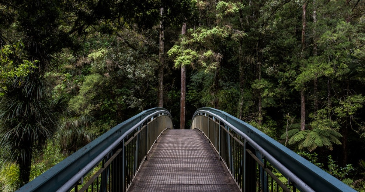 Почему природа лечит и сколько времени нужно уделять прогулкам