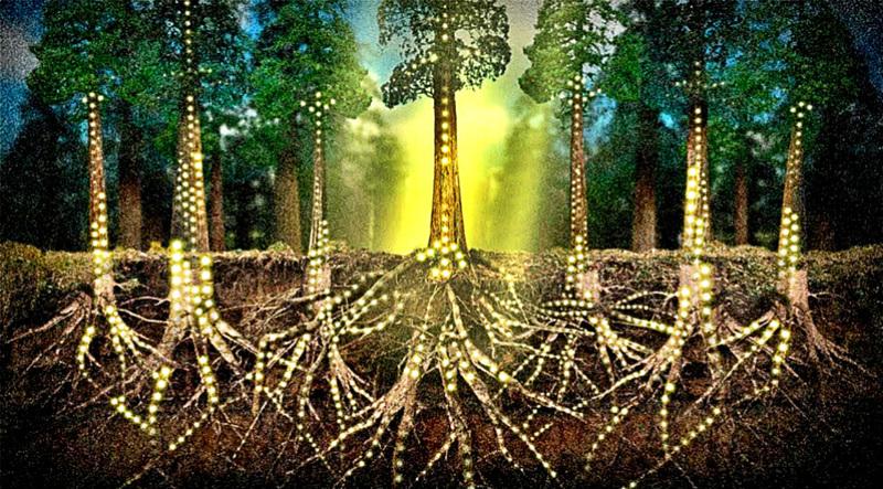 Растения способны общаться между собой